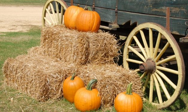 PTO Harvest Festival-October 28th